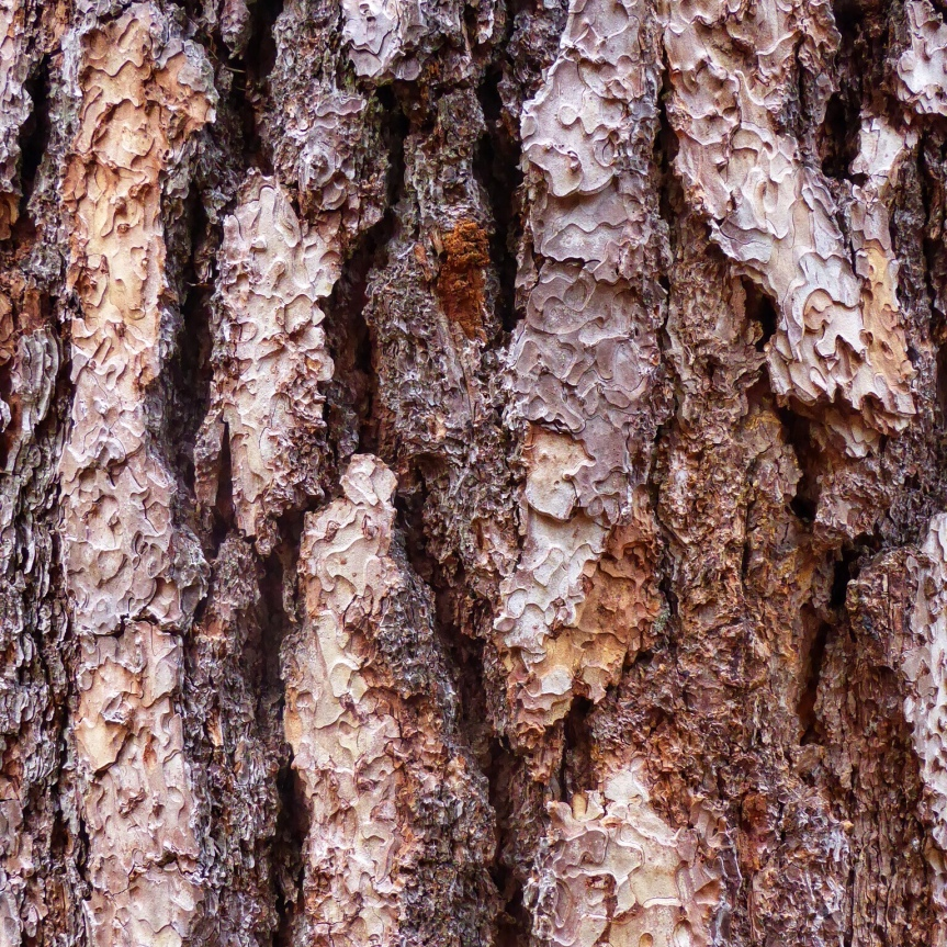 Macro Monday: Sequoia Bark in Yosemite