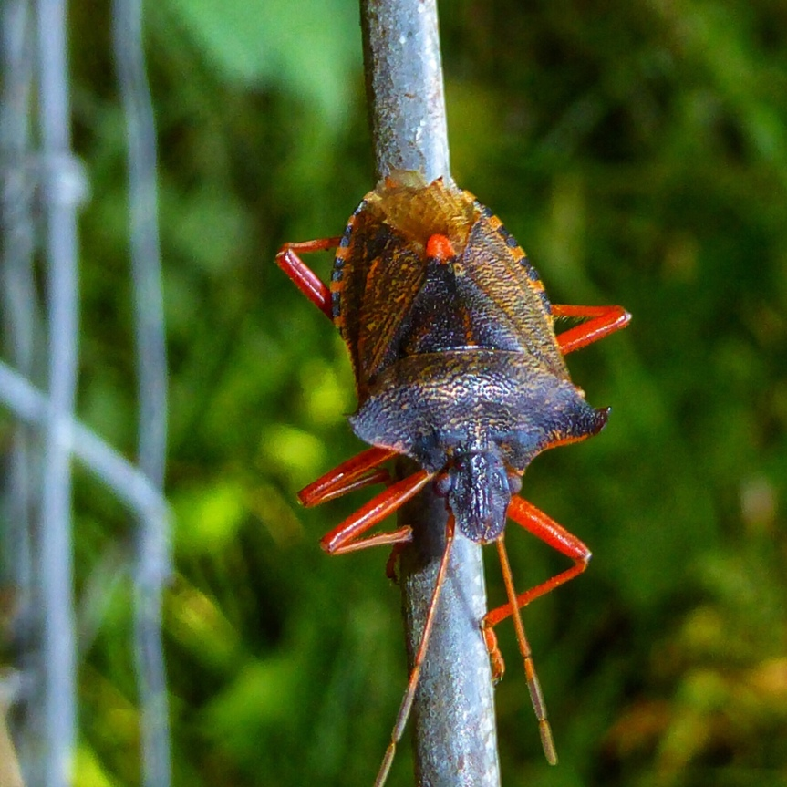 Macro Monday: The Forest Bug
