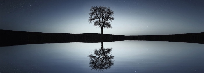 A tree reflected in water symbolic of Epicurus living in the present