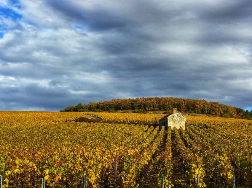 The golden slopes of Chablis in Autumn sunshine