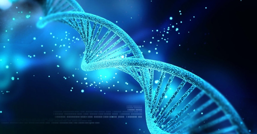 Strand of DNA offering a useful trace on one's ancestry